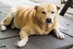 Ways to Help Your Aging Dog