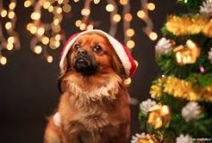 Why Giving a Puppy as a Christmas Gift is a Bad Idea