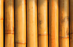 What Makes Bamboo Sustainable